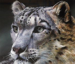 Snow Leopard by John Palmer