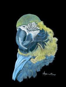 amortimer_parrot_550