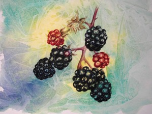 rhall_blackberries_550