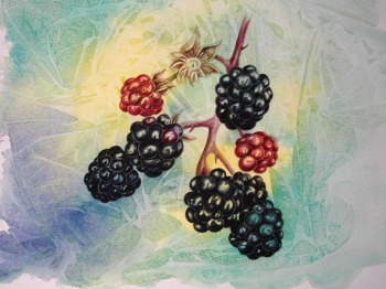 rhall_blackberries_550