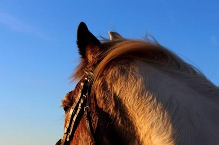 HorsePhoto2_1_550