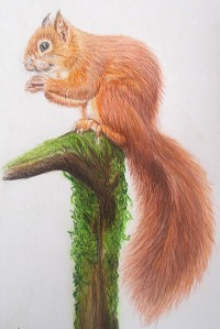 LJLuff_squirrel_550