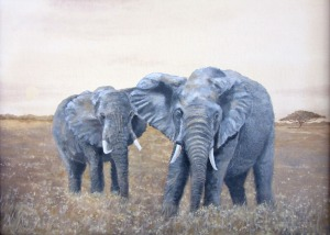DLegget_Elephants_550