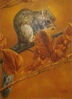 KarenBrown_Squirrel_550